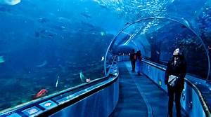 Aquarium of the Bay Admission Ticket San Francisco, USA ...