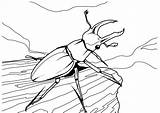 Coloring Beetle Realistic Insect sketch template