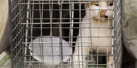 Keep Cats In Backyard by 5 Ways To Keep Cats Out Of Your Yard