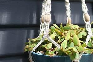 pot suspendu macrame pour fleurs et plantes en suspension With chambre bébé design avec pot fleur suspension