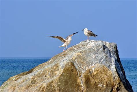 Pāvilostas novadā izstrādāti putnu un tauriņu vērošanas ...