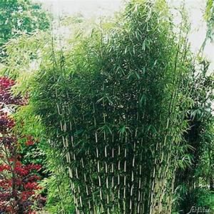Hohe Sichtschutz Pflanzen : sichtschutz pflanzen ~ Sanjose-hotels-ca.com Haus und Dekorationen