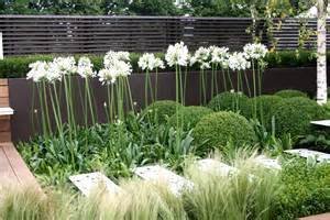 How To Make Garden Decking by Buxus Agapanthus Amp Silver Birch Gardens Pinterest