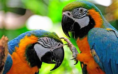 Colorful Bird Parrots Wallpapers Fighting Resolution Wallpapers13