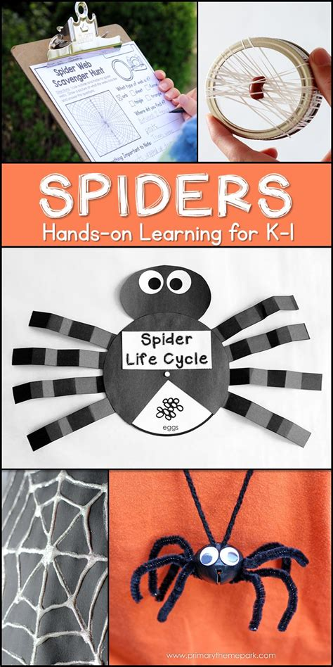 spider unit  kindergarten   grade primary