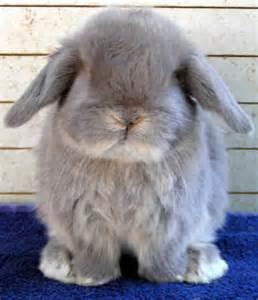 Bunny Rabbit Breeds