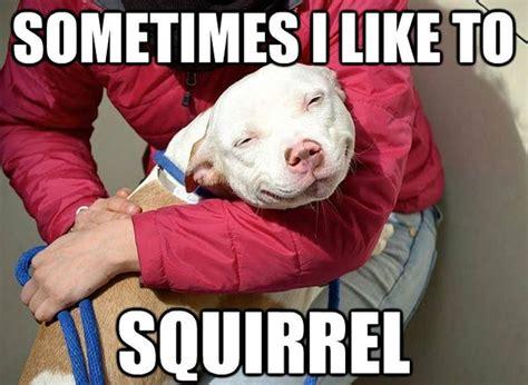 Smiling Dog Meme - 25 funny cat memes part 3 memes