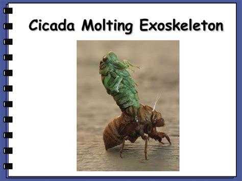 cicada shedding its exoskeleton ppt unit 9 notes powerpoint presentation id 2006938