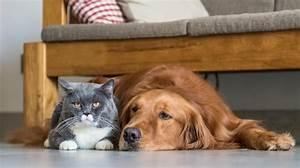 Katze Im Haus Halten : katzen und hunde gemeinsam halten so gelingt es ~ Lizthompson.info Haus und Dekorationen