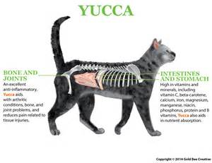appetite stimulant for cats nhv yucca get your cat to eat appetite