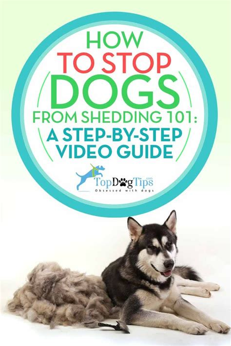 Reducing Shedding In Dogs by Best 25 Shedding Remedies Ideas On