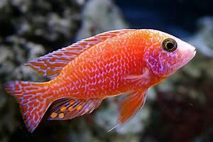 Most Beautiful Freshwater Fish ( 2009 ) | RateMyFishTank.com