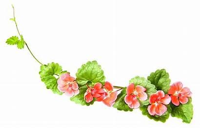 Blomsterranke Til Bright Composition Leaves Faded Fruit