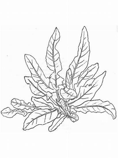Ausmalbilder Pflanzen Ausdrucken Malvorlagen Kostenlos Zum Plants