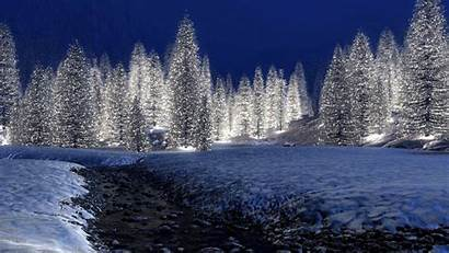 Winter Forest Night 1080p Wallpapers Snowy Trees