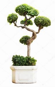 Arbustes Décoratifs à Fleurs : quelques liens utiles ~ Premium-room.com Idées de Décoration