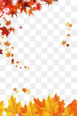 autumn,golden fall,maple leaves,fallen leaves,leaf,beautiful,the falling leaves,golden ...