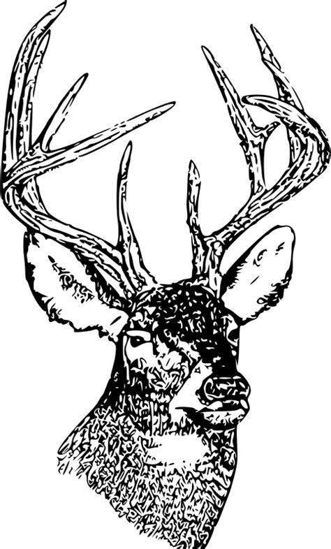 white tail deer buck head clipart clipground