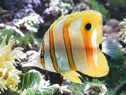 Fish Ocean Underwater Sealife Sea Nature Fishes