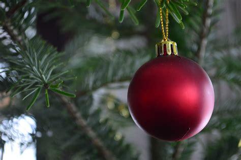 Branch, Flower, Red, Produce, Fir, Christmas