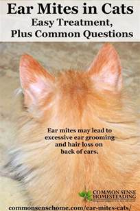 how do cats get ear mites ear mites in cats easy treatment plus common questions