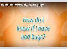 how do you tell if you bed bugs 28 images bedbugs