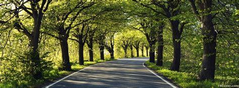 road  trees facebook cover photo fbcovercom