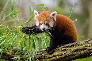 Up Close with the 5 Most Endangered Wildlife Species in ...
