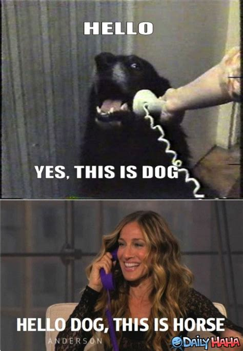 Sarah Jessica Parker Horse Meme - why hello there doggy