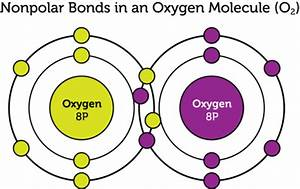 What is the difference between polar and non polar ...