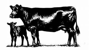Black Angus Cattle Prices Create Pinterest Cattle