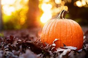 Pumpkin U0026 39 S Interesting Health Benefits
