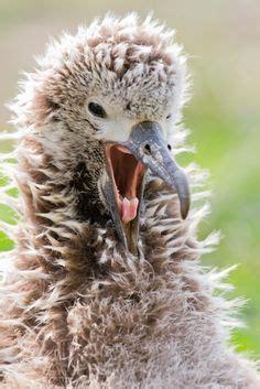 Midway Island Bird Species