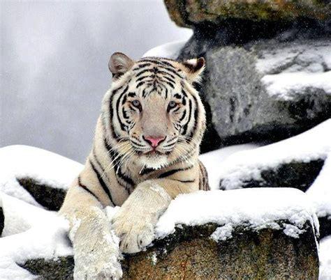 Best Amazing Animals Images Pinterest Exotic