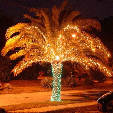 christmas lights on palm trees are a great way to show