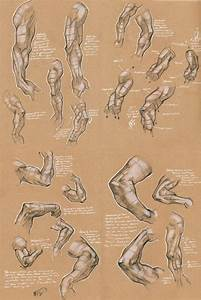 33 best Drawing Anatomy Refs Arms images on Pinterest ...