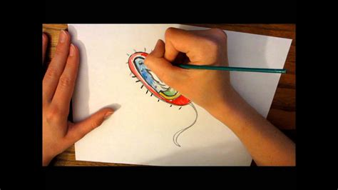 bacteria cell drawing youtube