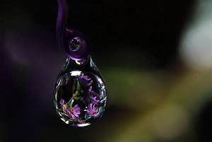 Purple Water Drop Macro Photograph Asters Flower Horizontal
