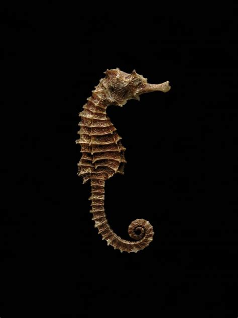 seahorse photography contest pictures image page