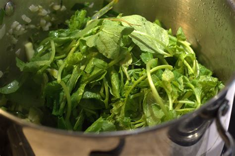 cuisiner des fanes de radis 28 images cuisiner les