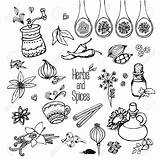 Spices Drawing Herbs Getdrawings sketch template