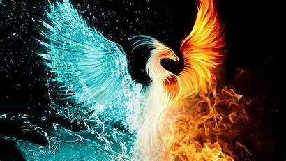 Phoenix Bird Wallpapers Desktop Background Resolution Computer
