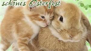 Frohe Ostern Bilder Kostenlos Herunterladen : frohe ostern 2018 kostenlose osterbilder youtube ~ Frokenaadalensverden.com Haus und Dekorationen
