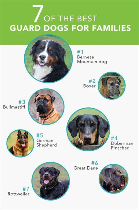 Best dog breed quiz
