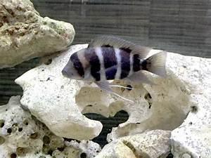 Welche Fische Passen Zusammen Aquarium : ein aquarium ohne pflanzen ist dies berhaupt m glich ~ Lizthompson.info Haus und Dekorationen