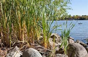 Que Planter En Juin : quelles herbes et gramin es planter en juin ~ Melissatoandfro.com Idées de Décoration