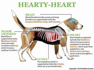 NHV Hearty Heart Remedy for Dogs with Heart Disease - NHV ...