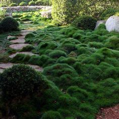 Asian Gardens Grass Valley by Succulents And Drought Tolerant Korean Grass One Of A