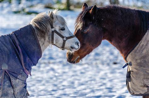 offspring nose horses facts horse gerry machen