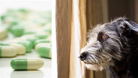 fluoxetine  dogs  dosage  side effects dogtime
